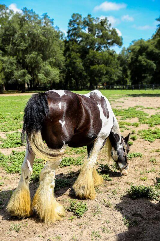 4 redenen waarom paardenliefhebbers dol zullen zijn op Ocala FL